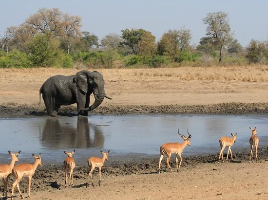 Kruger national park landscape with animals