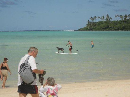 Muri Beach Club Hotel: Friendly island dogs