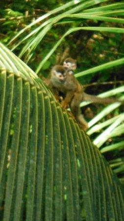 """Hotel Plaza Yara: """"Monkeys in the backyard"""""""