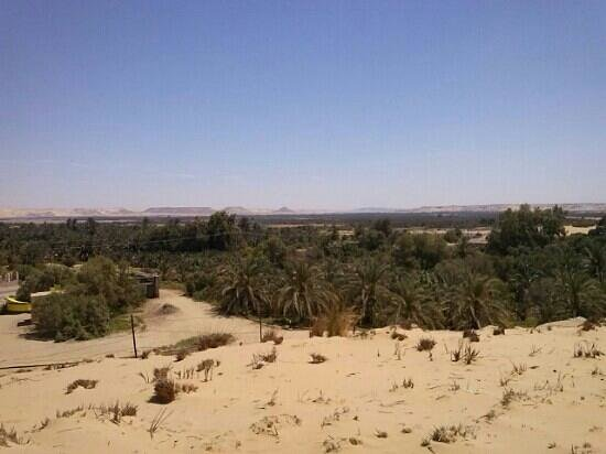 Bahariya (Bahereya) Oasis : this photo was captured at place nearby alexander museum.there are alot of water pools you must
