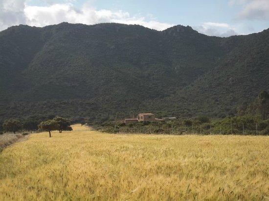B&B Rossofiore: altes Gehöft im Valle de Monte Porceddus