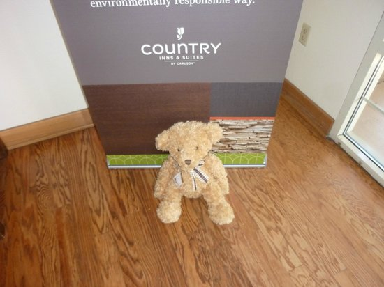 Country Inn & Suites by Radisson, Mesa, AZ: HideAway Haven Teddy visiting from Australia