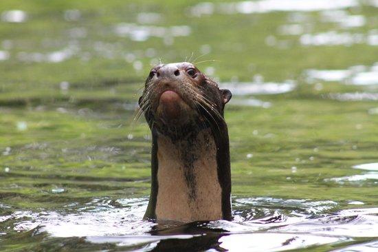 Napo Wildlife Center Ecolodge照片