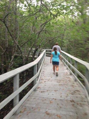 Secret Woods Nature Center: Elevated walkway