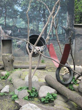 Cosley Zoo: Sleepy Raccoons