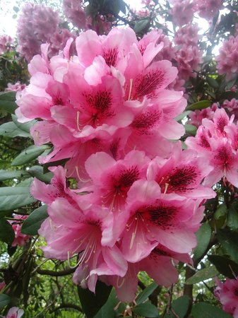 Hendricks Park: Gorgeous plants of all colors.