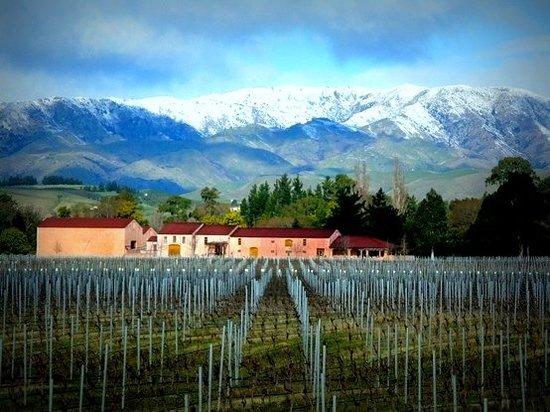 Isabel Vineyard: Isabel Winery