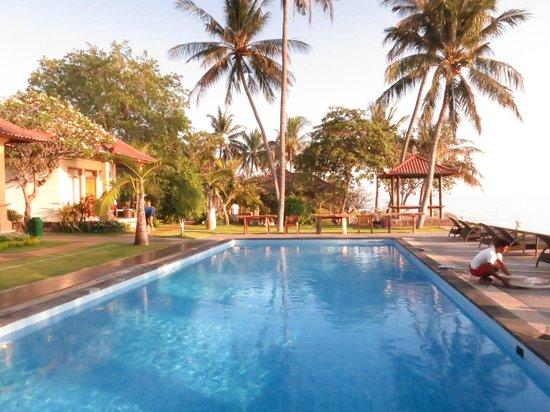 Puri Madha Bungalows: Poolside