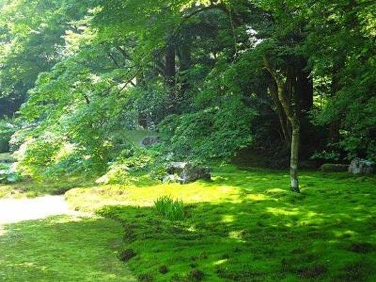 Kiyomizu Temple: 清水寺本坊庭園 苔がとてもきれい!
