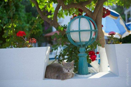 Kemer Ipek Hotel: local cat
