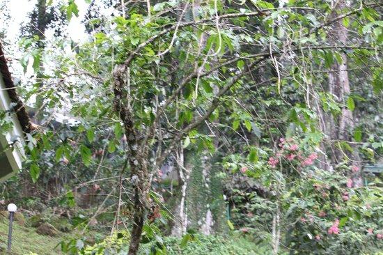 The Tall Trees Munnar: View