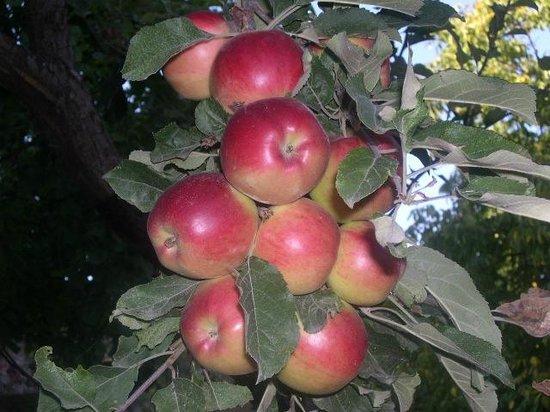 HyeLandz Eco Village Resort: Apples