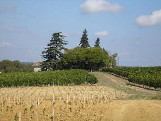 Domaine de la Rogere: Vignoble