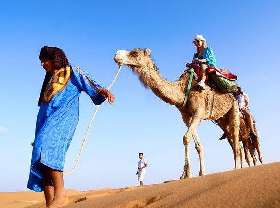 Morocco Camel Trekking - Day Tours