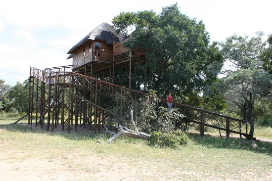 "Pezulu Tree House Game Lodge: lodge ""mountain"""
