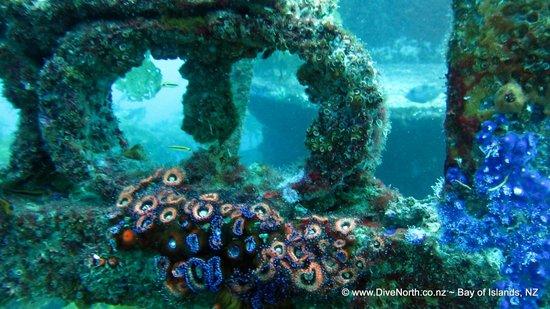 Dive North: Wreck diving delights