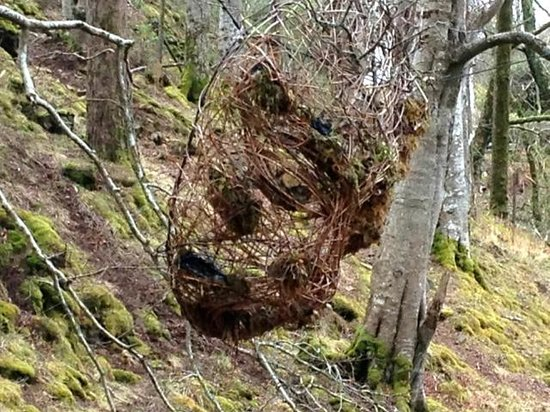 Calgary Art in Nature: green man's face in the woods