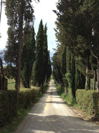 Villa Cambi B&B: Cypress trees lined entrance