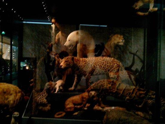 Museum of Natural History: Magnifiques animaux préservés