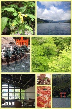 Sengokuhara Fuga : 新緑の箱根