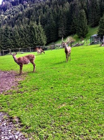 Wild & Erlebnispark Ferleiten
