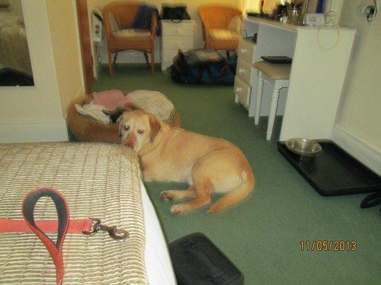 Port Light Hotel: dog friendly