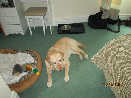 Port Light Hotel: room dog friendly