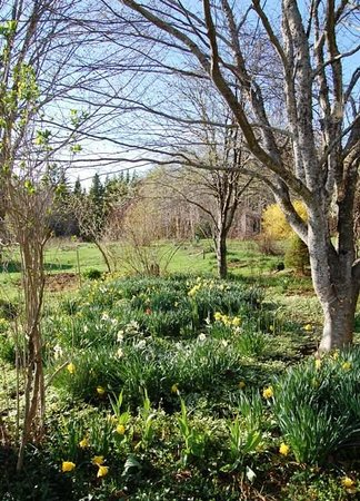 Middle River, Canada: Spring garden view