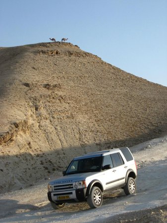 Israel Travel Company - Private Guide Day Tours : Jeep in the desert