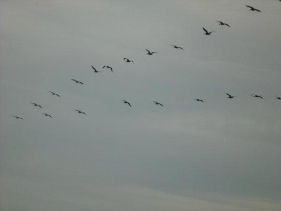El Palmar Beach: aves
