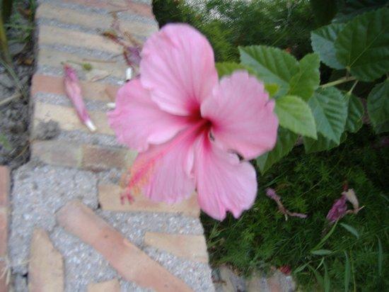 Benjamine Guest House: fiore
