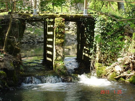 Le Moulin de Monternault : NOTRE RIVIERE