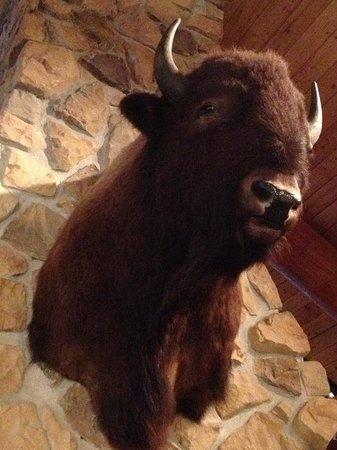 Gun Barrel Steak & Game House: Buffalo decor in Gun Barrel