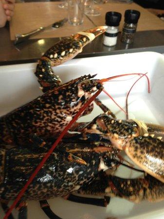 La Table d'Aligre: petit homard bleu