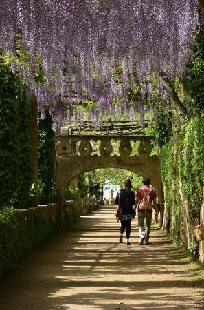 Il viale dell 39 immenso con cascate di colorate wisteria picture of villa cimbrone gardens - Giardini di villa cimbrone ...