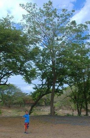 BEST WESTERN El Sitio Hotel & Casino: Hay mucho monos, iguanas, patos y gasos en el jardin.