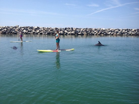 Dana Point, Kalifornien: paddle boarding with dolphins