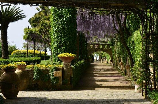 Il viale dell 39 immenso con cascate di colorate wisteria foto di giardini di villa cimbrone - Giardini di villa cimbrone ...