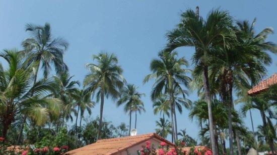 Mendihuaca Caribbean Resort: vista