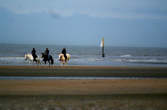 Alberthotel : Horses enjoying the beach