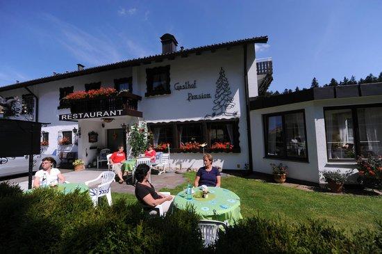 Schwarzwaldtanne