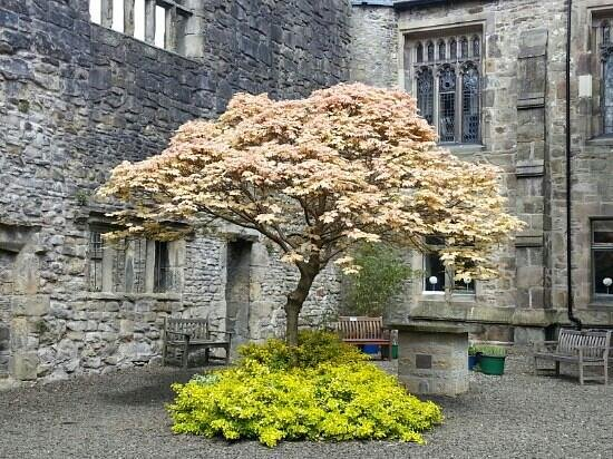 Whalley Abbey: beautiful tree
