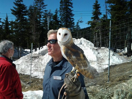 Grouse Mountain : Worth the walk through the snow to see this gorgeous Owl, even if we missed the Bears.