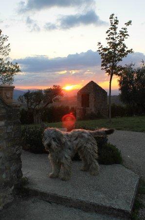 """Agriturismo Ampugnano: """"Nebbia"""" (simpaticissimo) al tramonto"""
