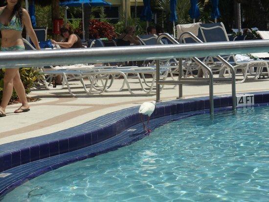 Best Western Key Ambassador Resort Inn: piscina