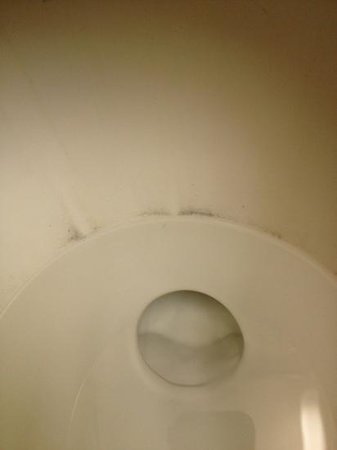 La Quinta Inn & Suites Florence : dirty toilet