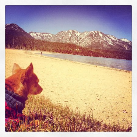 Harveys Lake Tahoe: Bambi enjoying the scenery