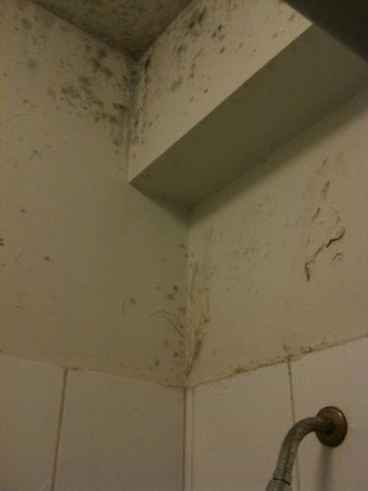 Hostal de la Barra: Overwhelming mold and filth above lackluster luke warm shower in men's bathroom