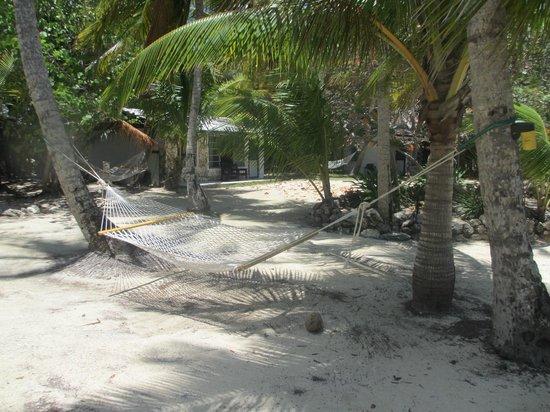 Small Hope Bay Lodge: Lots of hammocks
