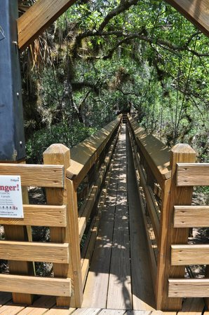 Myakka Canopy Walkway : Elevated canopy bridge